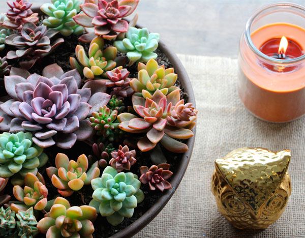 Inspiraç u00e3o Suculentas na decoraç u00e3o Blog Casa da Iaza -> Enfeites De Mesa Para Casamento Com Suculentas