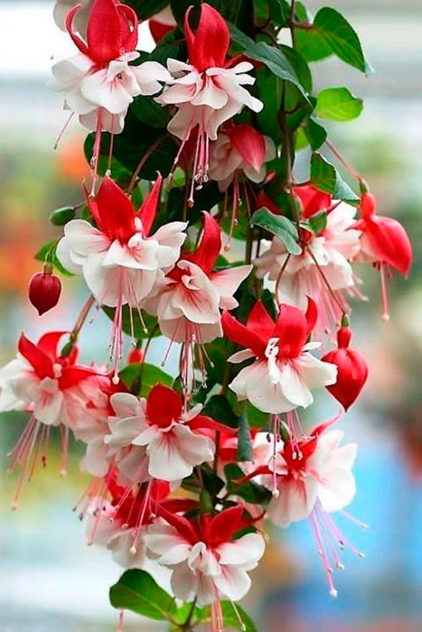 flor de ervilha no casamento de outono