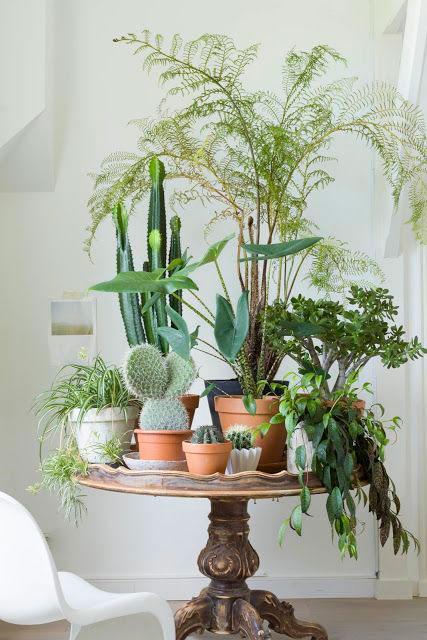 jardim de suculentas em casa