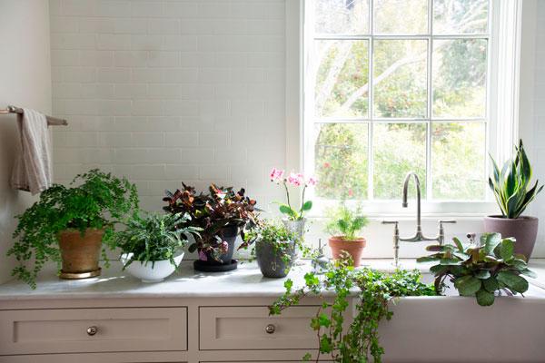 flores na decoração iaza blog