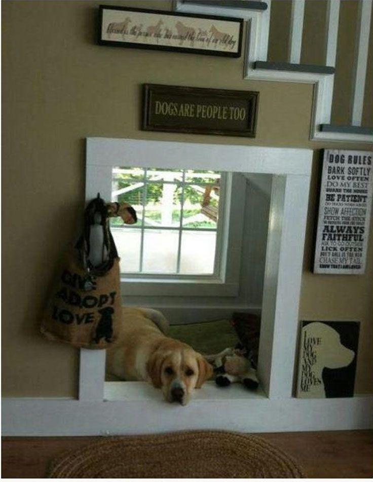 animais embaixo da escada