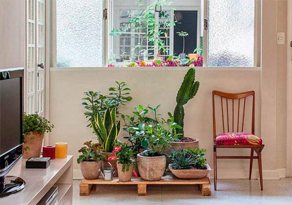 decoração com elementos naturais