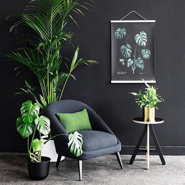 plantas em ambiente escuro