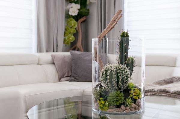 cactus na decoração
