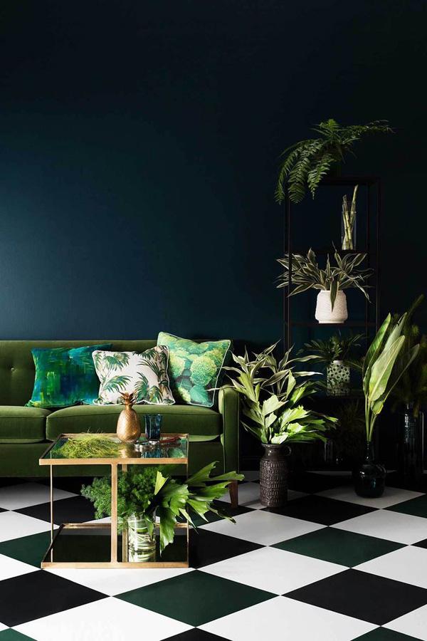 plantas em ambientes escuros