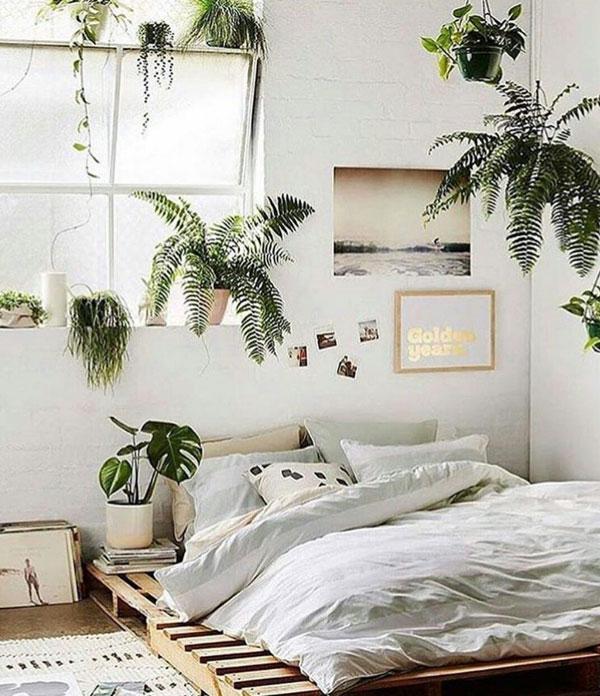 plantas na decoração hygge
