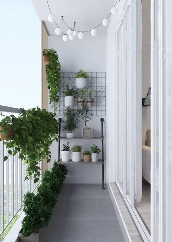 coleção de plantas na varanda