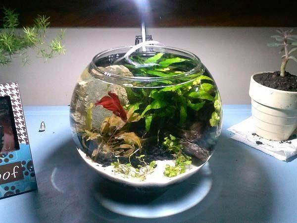 aquário portátil