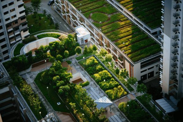 telhados ecológicos