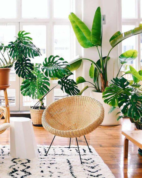 Plantas na decoração de casa cringe