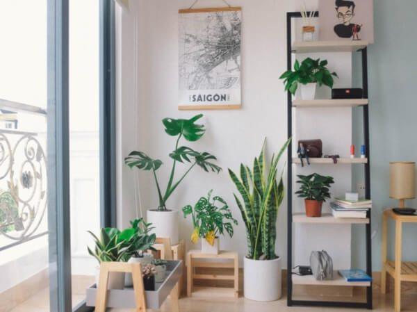 Como usar plantas na decoração